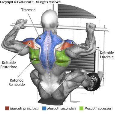 Pin de Mass Phase One en muscle milk | Pinterest | Espalda ...