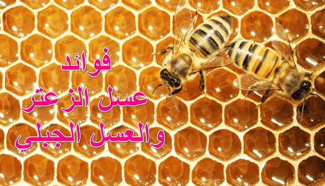 فوائد عسل الزعتر والعسل الجبلي Honey Benefits Honey Thyme