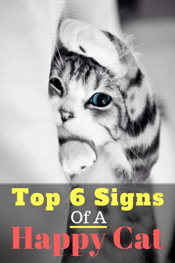 Top 6 Signs That Show Your Cat Is Happy Cat Love Cat Signs Cats