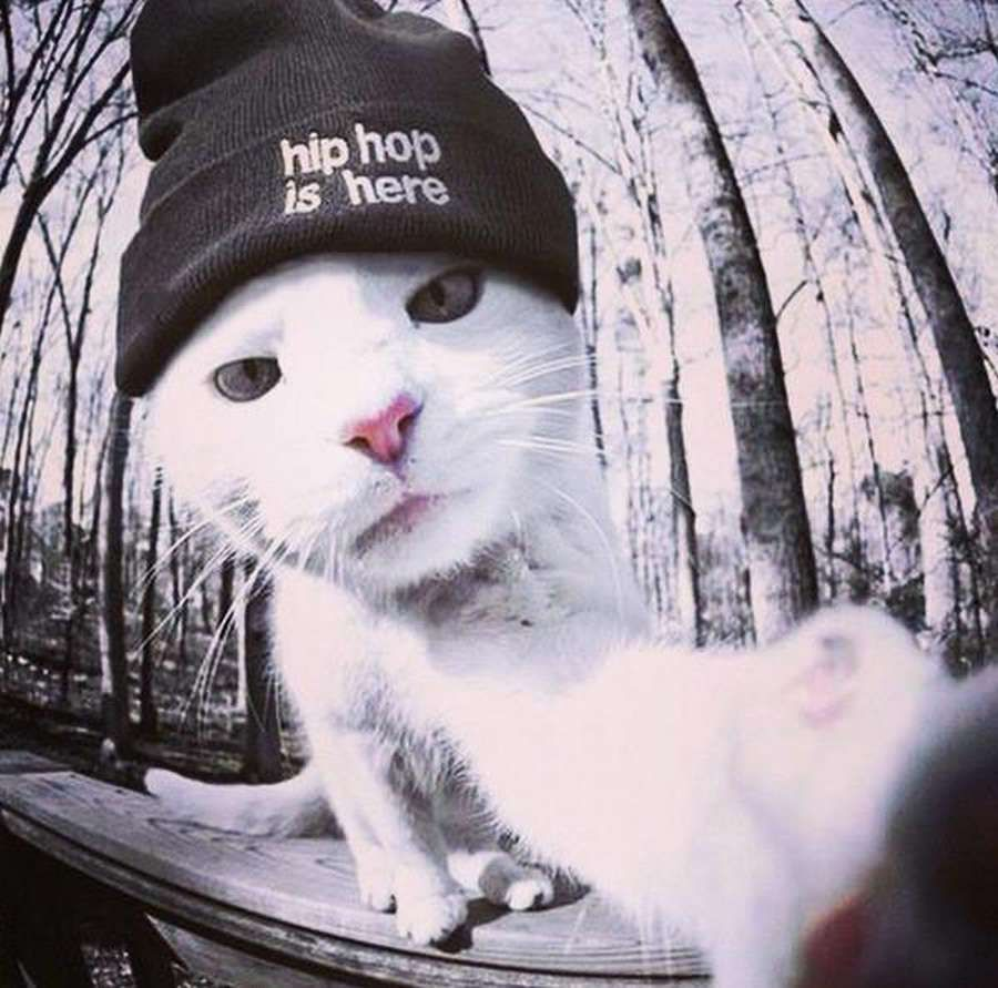 cat in the hip hop hat
