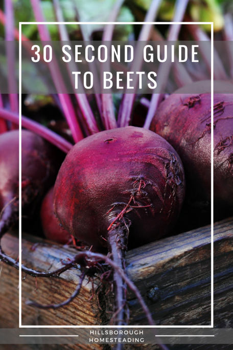 Beginner S Guide To Growing Radishes Growing Beets Growing Winter Vegetables Beets