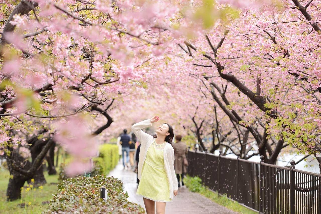 A New Romantic Cherry Blossoms Design Eyecare By Rohto Eyecare Eyes Japan Travel Cherryblossom Sakura Beautif Japan Spring Japan Cherry Blossom Festival