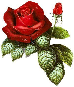 Laminas Y Trabajos Con Flores Red Roses Flower Painting Flowers