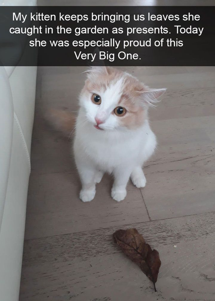 """""""Cats love their friends and bite their enemies, quite unlike people, who are incapable of pure love and always have to mix love and hate."""" After all, they don't call cats """"human's best friend"""" for nothing. #cat #catmemes #funnycats #funnyanimal #animalmemes"""