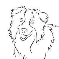 Border Collie Coloring Pages Surfnetkids
