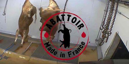 Espeluznantes imágenes de un matadero causan polémica en Francia | Igualdad Animal