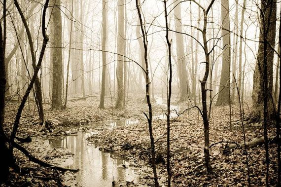 Dreamy fog landscape  tree photograph