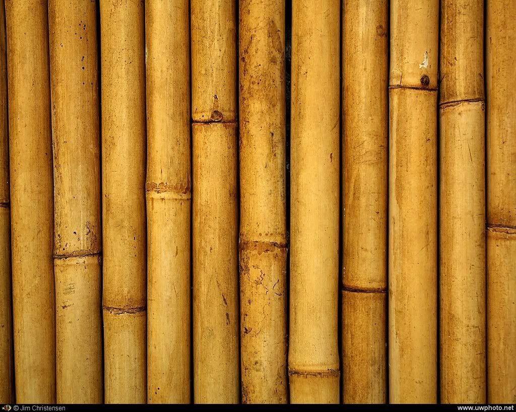 Bamboo dating uk