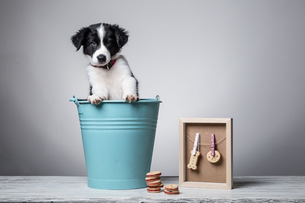 100 % cuteness by HappyDogs by Gabor Török on 500px