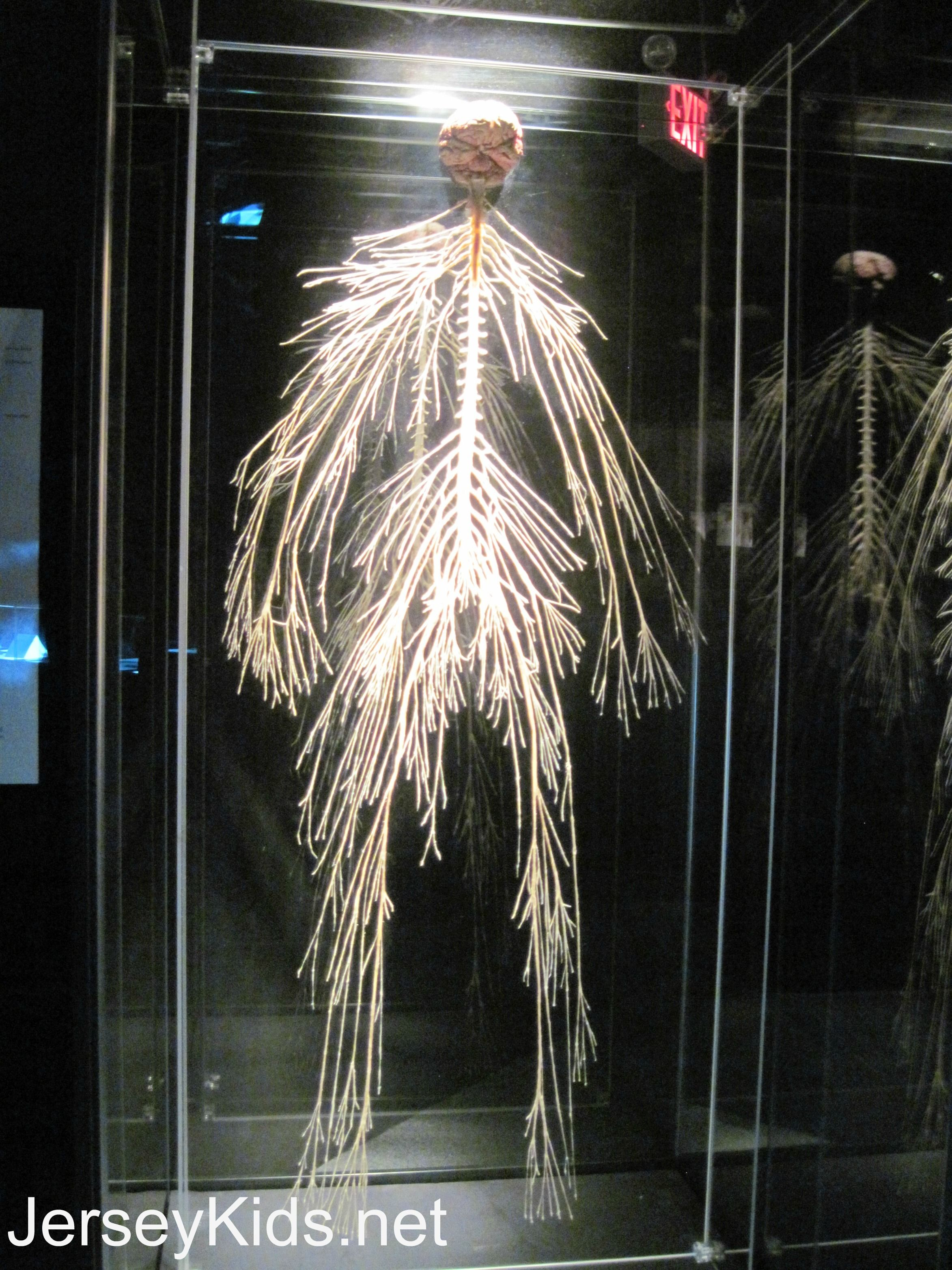 Review Body Worlds Pulse