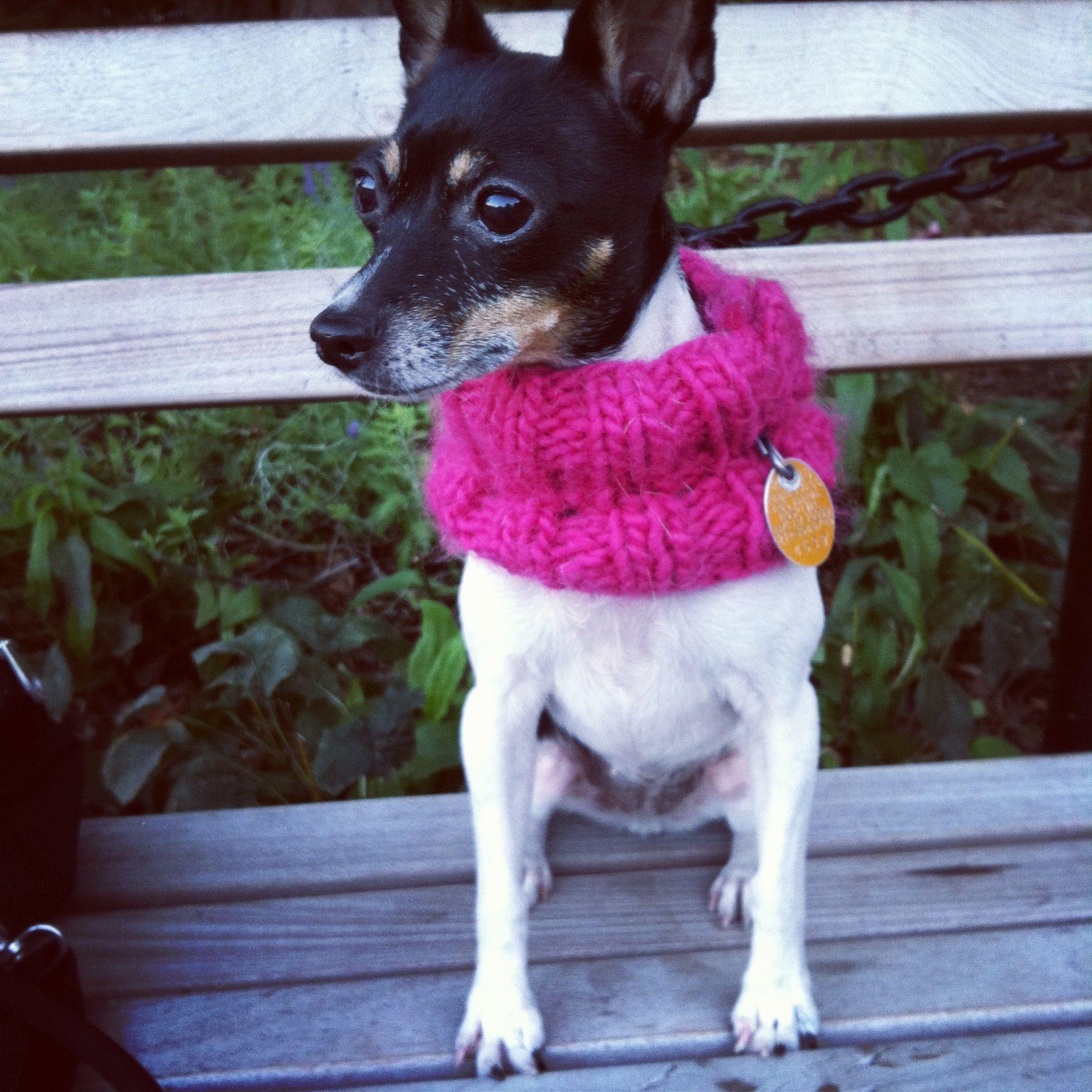 Dog Cowl - too cute!! @Jessi Mayfield - Frankie says she needs ...