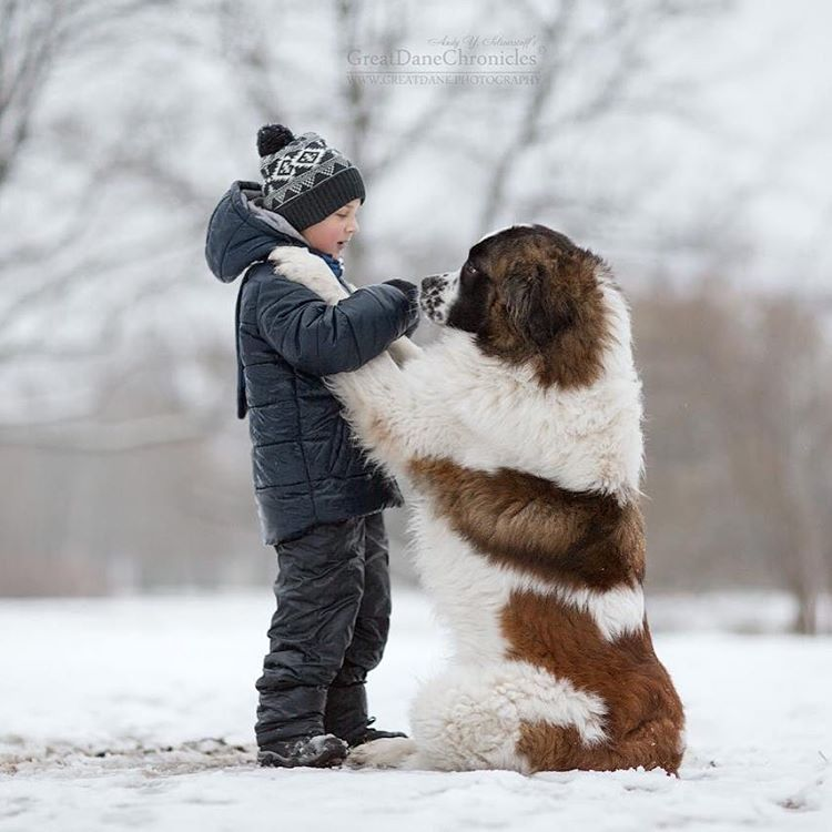Andy Seliverstoff Takes Photos Of Little Kids And Their Big Dogs - Tiny children and their huge dogs photographed in adorable portraits by andy seliverstoff