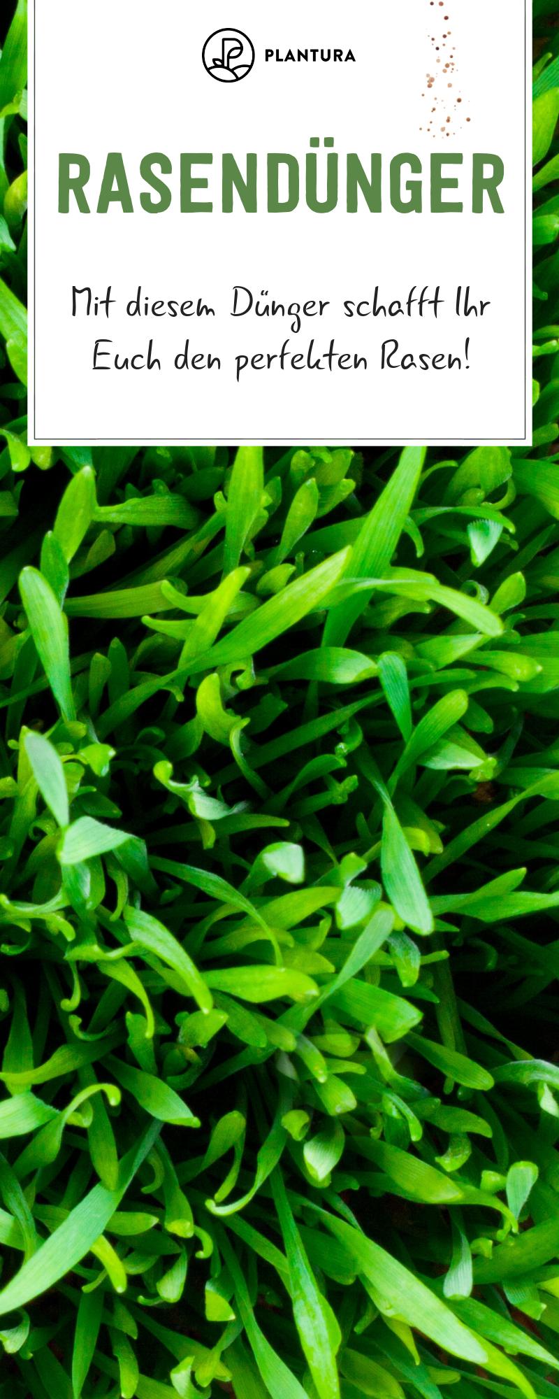 Rasendunger Dungerubersicht Fur Den Perfekten Rasen Plantura Rasen Gruner Rasen Rasen Dungen
