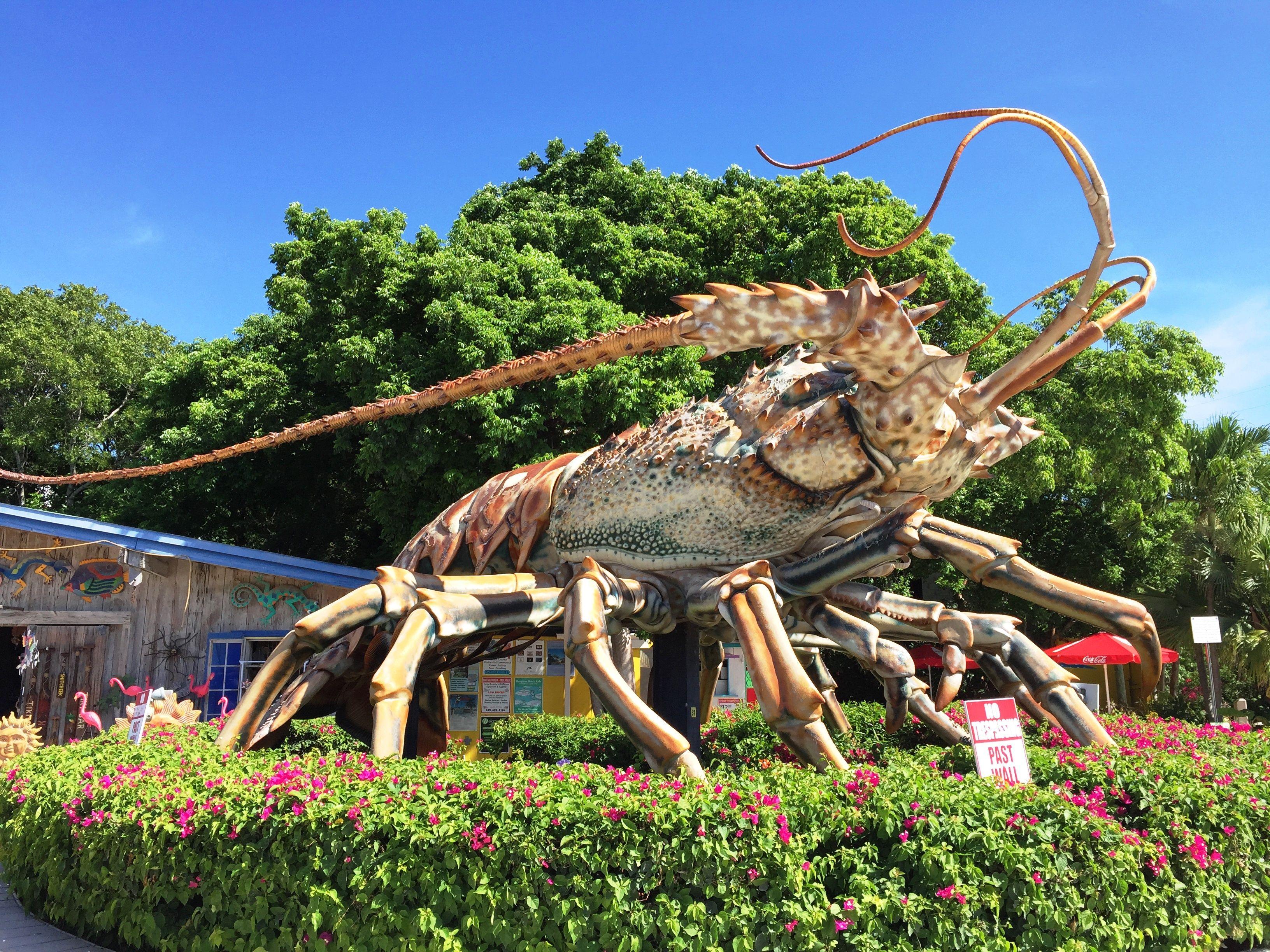 See Big Betsy, The Giant Lobster In Islamorada