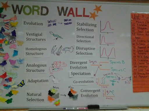 My Wordwall For Evolution Science Classroom Evolution Word Wall