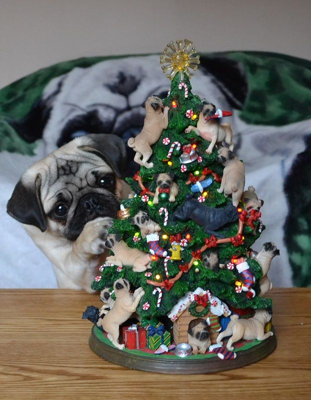 Need This Tree Pug Puppy Fascinated By Pug Christmas Tree Puglife