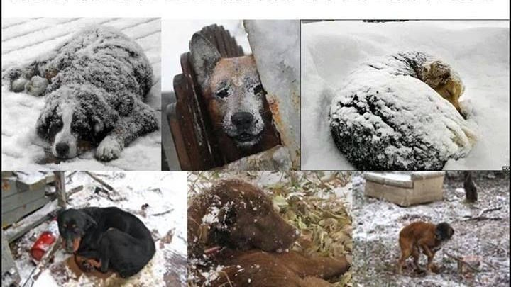 Bring dogs and cats inside from the freezing temperatures https://www.change.org/p/virginia-state-senate-bring-dogs-and-cats-inside-from-the-freezing-temperatures