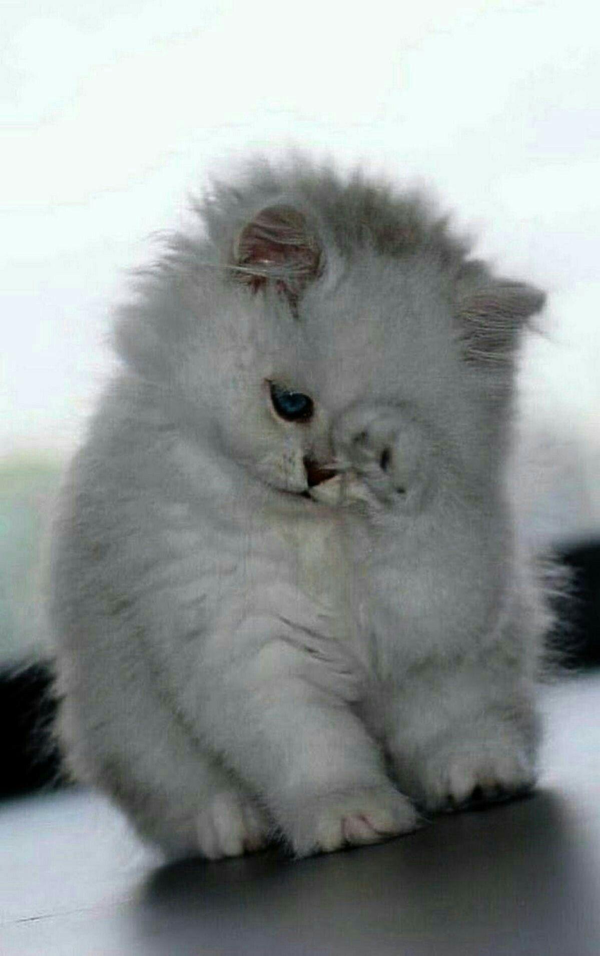 Pin By Oksana On Razom Kittens Cutest Cute Animals Baby Cats