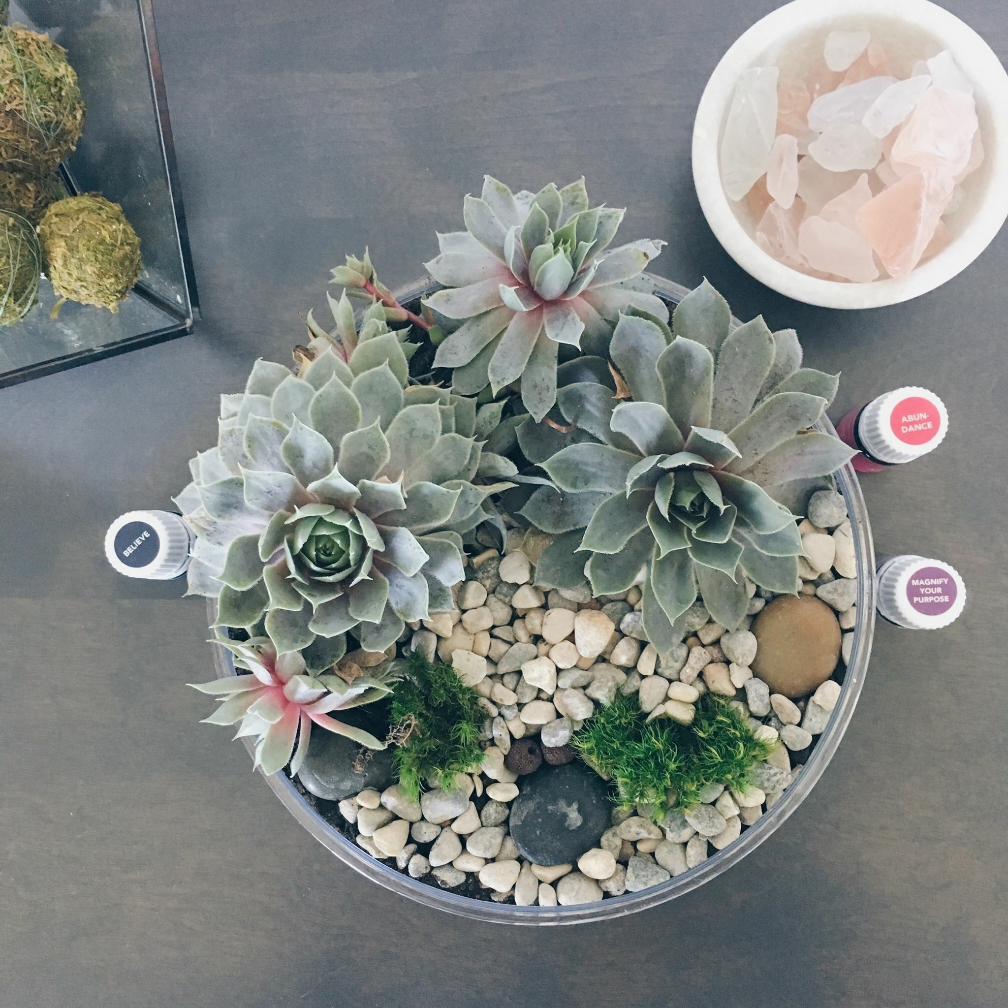 Succulents Essential Oils Essential Oil Plants Succulents