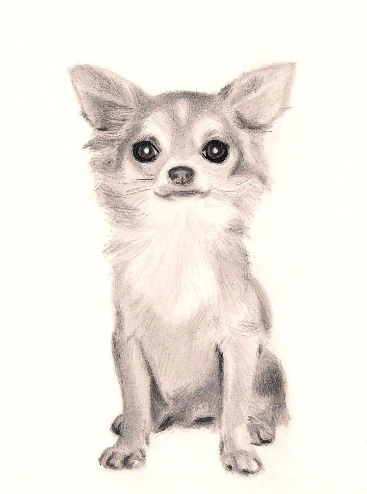 Long Haired Chihuahua By Isadorrah On Deviantart Com Chihuahua