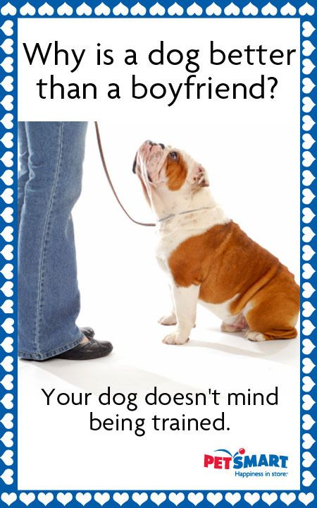 Come See Me For Dog Training Positive Dog Training Dog