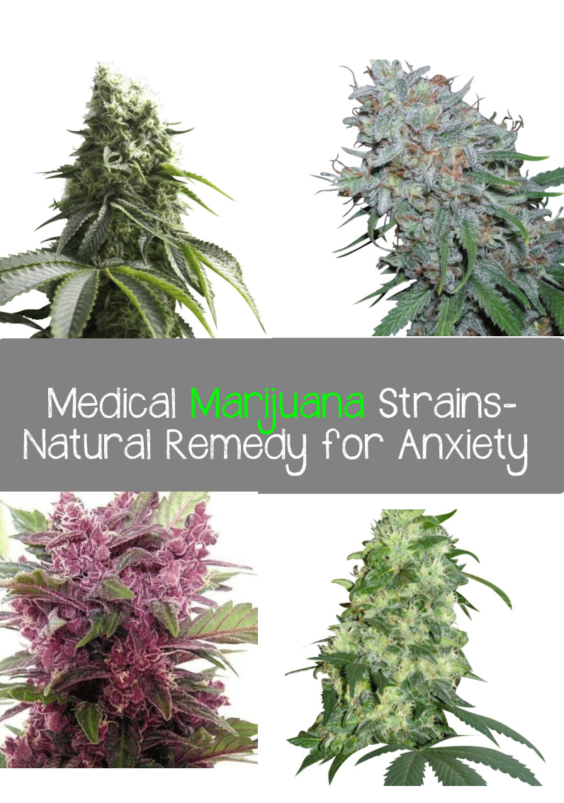 Top 4 Medical Marijuana Strains-Natural Remedy for Anxiety - Marijuana Recipes