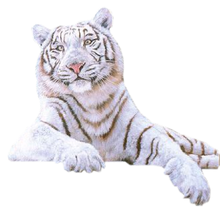 White Tiger Png Picture Png Image White Tiger Cute Animals Tiger