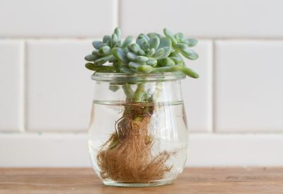 How-To: Propagating Succulents in The BULLETIN at Terrain