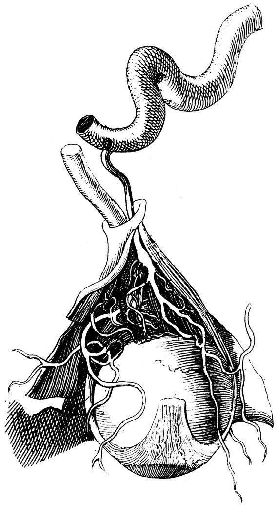 Skull decor, Medical poster, Anatomy poster, Medical prints, Skull ...