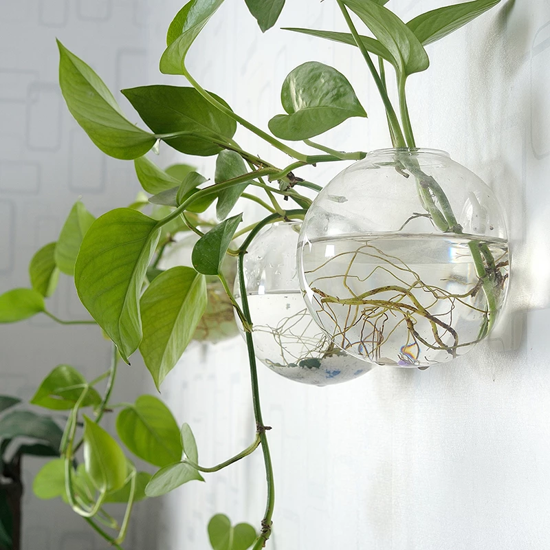 Pack Of 4 Wall Hanging Plant Terrariums Hanging Glass Planter Glass Or Gardenmissyou Hanging Glass Planters Plant Vase Hanging Plants