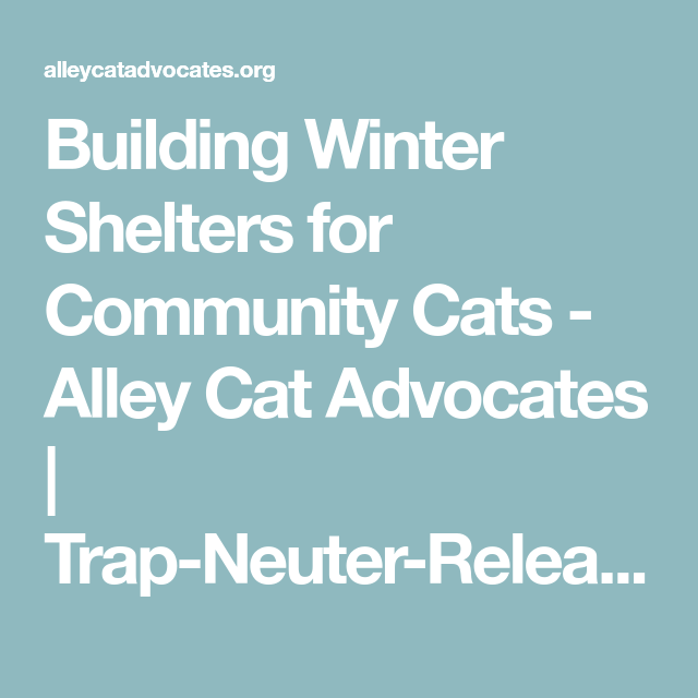 Building Winter Shelters for Community Cats Alley Cat