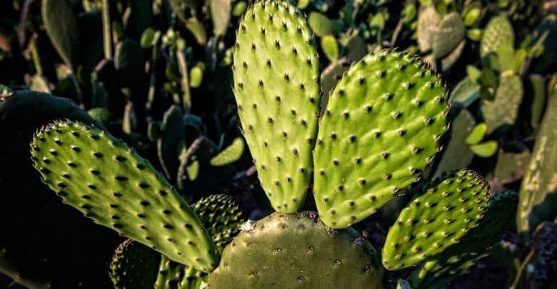 البلاستيك النباتي من عصير الصبار غير سام وسريع التحلل Plant Leaves Plants Leaves