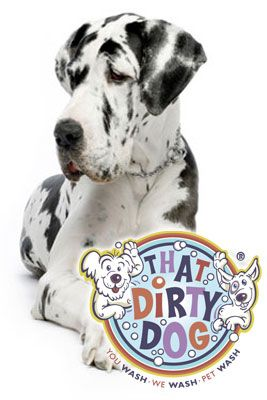 Take your dog or someone else s to a do it yourself doggie wash take your dog or someone else s to a do it yourself solutioingenieria Image collections