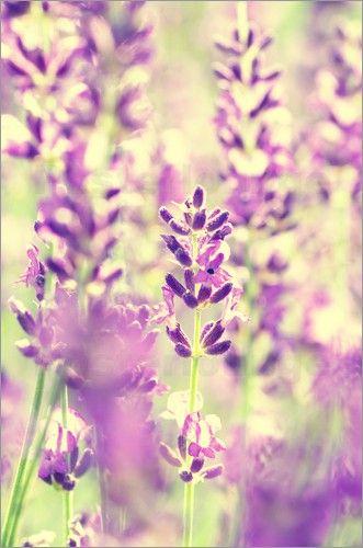 Amazon De Smallbeefly Lavendel Fenster Vorhang Verdunkelnd