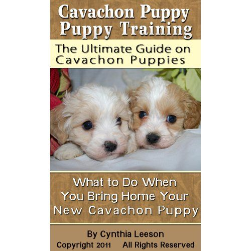 Cavachon Puppy Training The Ultimate Guide On Cavachon Puppies What To Do When You Bring Home Your New Cavachon Pupp Cavachon Puppies Puppy Training Cavachon