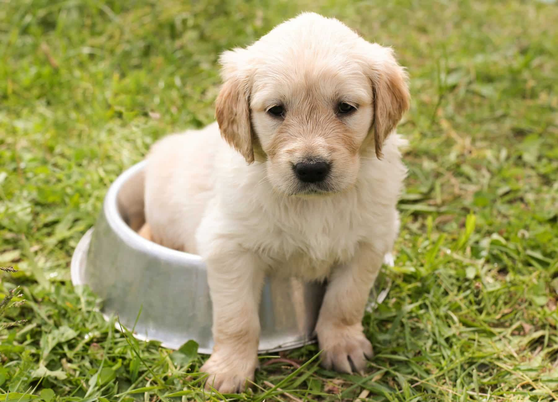 Top Cute Dog Names In Canada In 2019 Cute Dogs Cute Names For