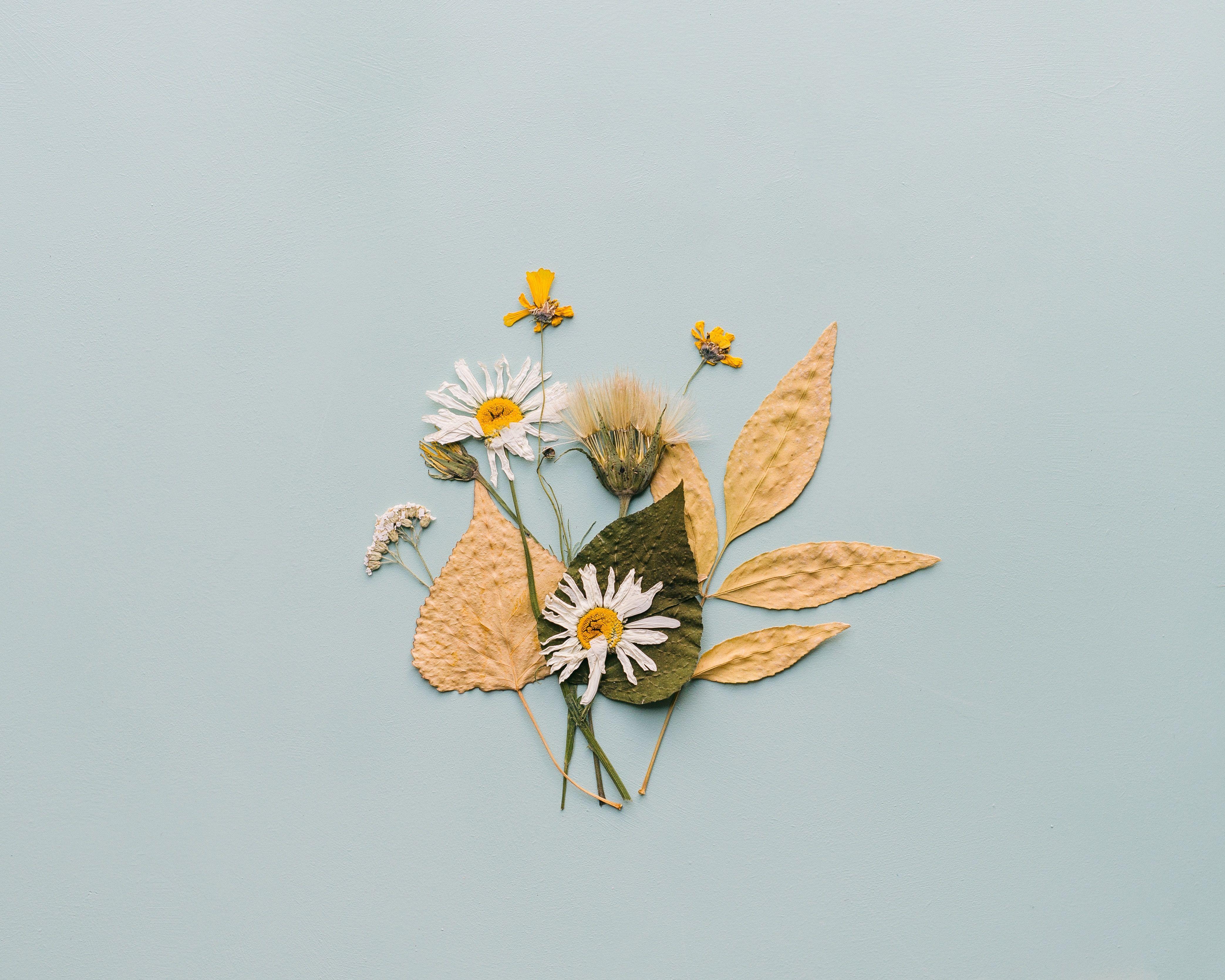 Create dried flower botanical plates pressed flowers diy