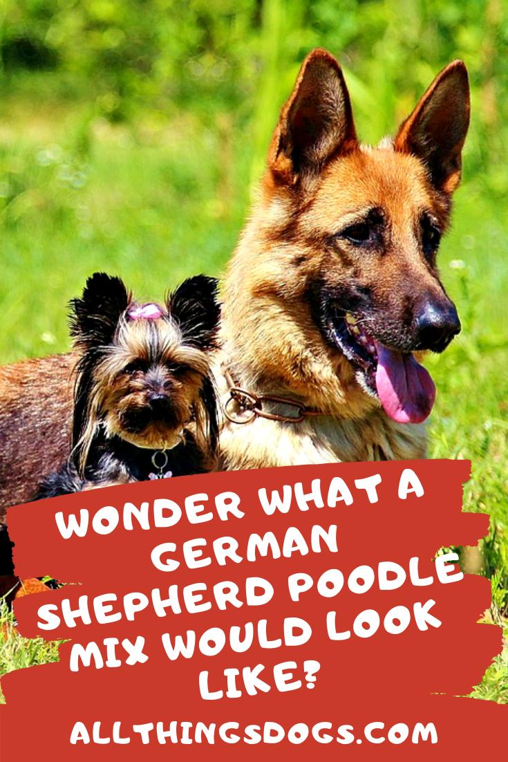 Pin On German Shepherd Dog Breeds