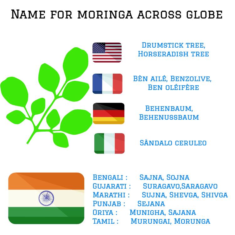 Health Benefits Of Moringa Moringa Benefits Of Moringa Leaves What Is Moringa