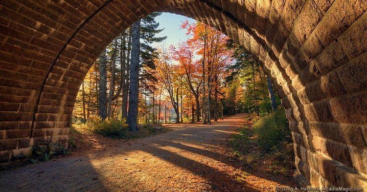 Acadia Magic - Carriage road
