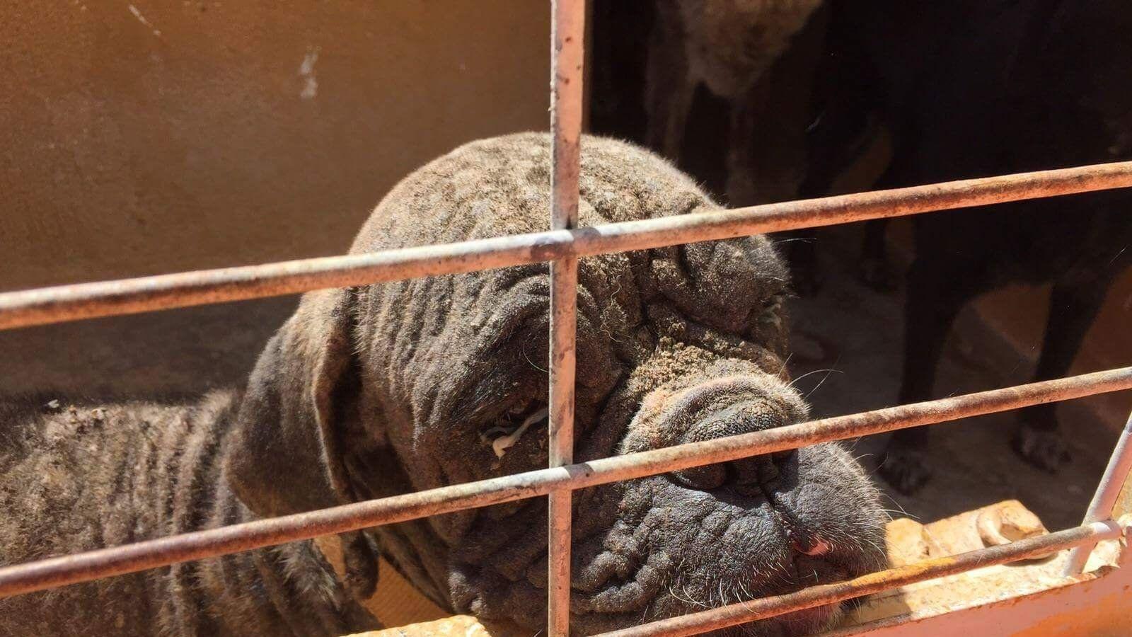 """Actualmente, la perrera municipal de Motril la gestiona una desratizadora, Athisa.La misma empresa que el Tribunal Superior de Justicia  decretó  no apta para las labores relacionadas con la protección animal porque """"nada tenían que ver con la actividad de desinfección de plagas"""".   Se  están sacrificando perros supuestamente """"enfermos"""" sin ningún motivo . A cachorros, por supuestamente tener  parvovirus , y a perros ancianos, por tener sarna. A todos ellos se les está sacrificando. Están…"""
