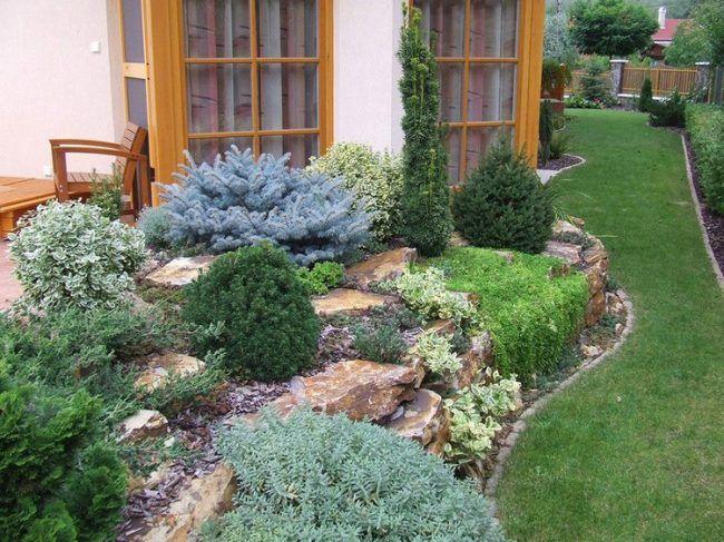 steingarten-anlegen-immergruene-gehoelze-mulch-terrassen - pflanzen fur steingarten immergrun
