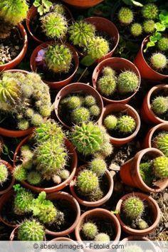 Kakteen Z 252 Chten Succulent Plants Amp Gardens Kaktus