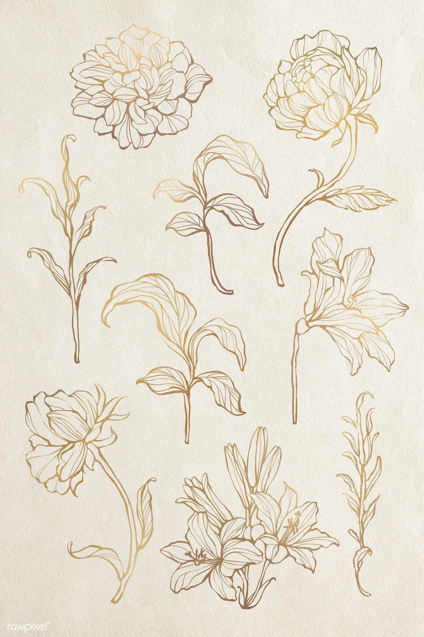 Download Premium Illustration Of Gold Floral Outline Set 2019696 Leaf Outline Flower Outline Line Art Flowers