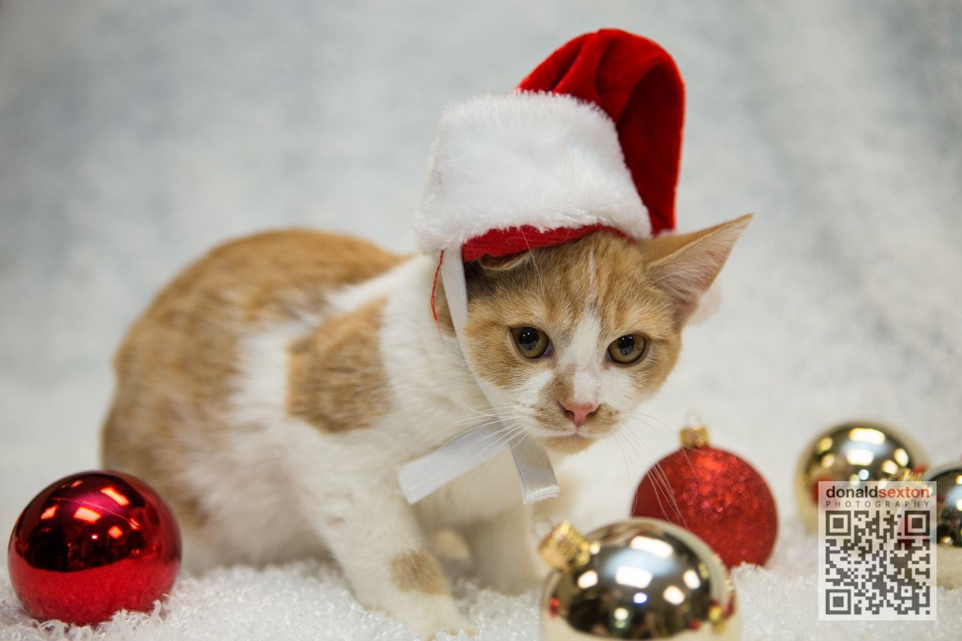 More Holiday Cheer at The Animal Protection League Inc