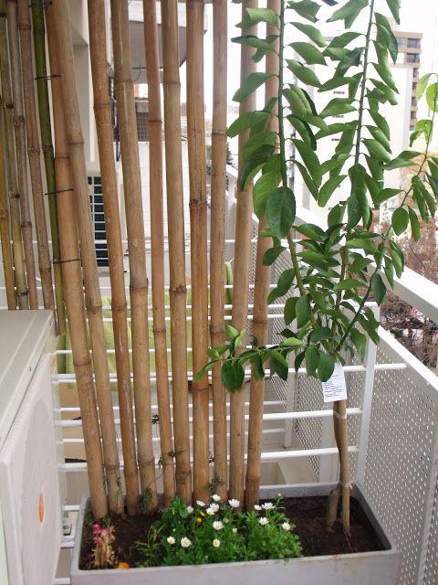 Imagen relacionada casa pinterest balcones ca as y - Canas de bambu decoracion exterior ...