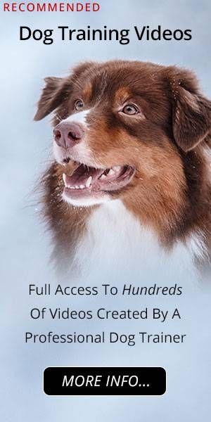 Australian Shepherd Information Resources And Community Dog