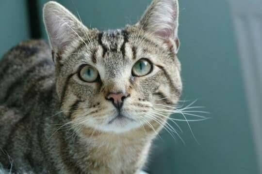 Simba Cat Grange Toomebridge Cat Uk Found Cat Cats