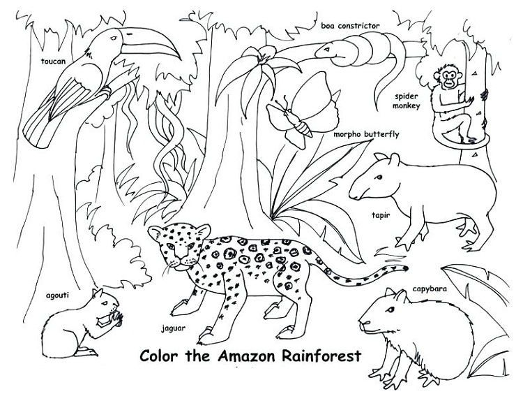 Animal Habitat Coloring Pages Rainforest Animals Amazon Rainforest Animals Jungle Coloring Pages