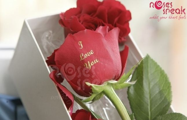 Valentine day rose for proposal with your love message and customized message on real rose ...